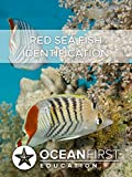"""Tired of asking, """"What kind of fish was that?"""" after your dive? The Red Sea Reef Fish Identification course can help you with that. Throughout this course you will learn to identify both the behavioral and morphological characteristics of fis..."""