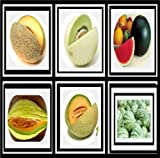 Survival Fruit Seeds Only .99 Non Hybrid No GMO Real Survival Seeds