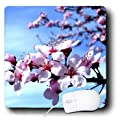 3dRose LLC 8 x 8 x 0.25 Inches Mouse Pad, Blue Sky and Pink Cherry Blossoms-Flowers-Photography (mp_39403_1)