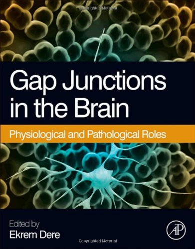 Gap Junctions in the Brain: Physiological and Pathological Roles