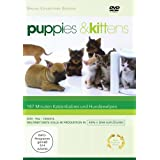 Puppies & Kittens - Hunde und Katzen [Special Collector&#39;s Edition] [Special Edition]von &#34;Timm Hendrik Hogerzeil&#34;