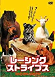 レーシング・ストライプス [DVD]