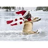 Avanti Christmas Cards, Skating Pug, 10 Count ~ Avanti Press