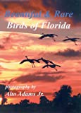 img - for Beautiful & Rare Birds of Florida book / textbook / text book
