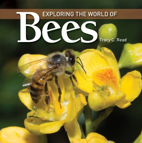 Exploring the World of Bees, Tracy C. Read