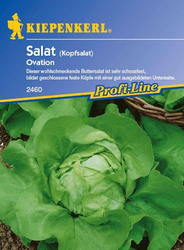 Salat: Ovation, Lactuca sativa var. capitata - 1 Portion