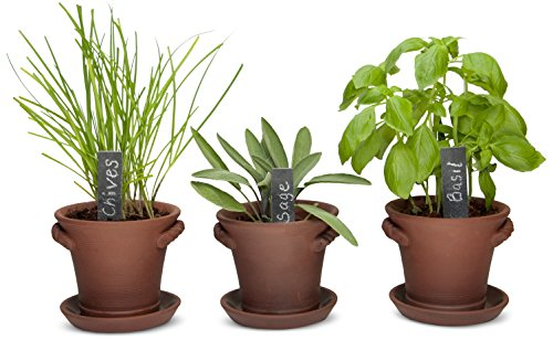 NEW- Rustic Charm Herb Trio Kit - Attractive Rustic Planter Pots + Slate Markers + Fiber Soil + Germination Bags + Basil, Chive and Sage Seeds. Grow a fresh Indoor Kitchen Window Garden. Great Gift. (Herb Garden Window compare prices)