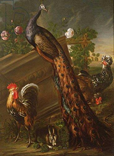 kunstdruck-poster-david-de-koninck-peacock-and-cockerels-17th-century-hochwertiger-druck-bild-kunstp
