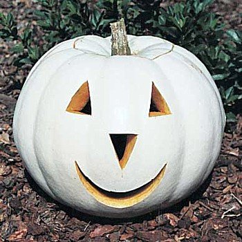 Buy Ghostly White Pumpkin 10 Seeds – Lumina – FREE SHIPPING ON ADDITIONAL HIRTS SEEDS