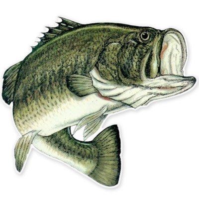 Largemouth Bass Fishing Fish Vinyl Sticker - SELECT SIZE (Fishing Wall Decals compare prices)