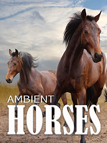 Ambient Horses
