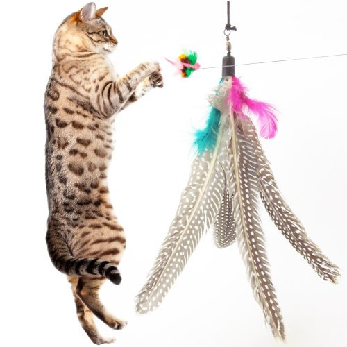 Image 5 Pack Super Guinea Fowl Feather Refill Replacement For The Original Bird Catcher Go Cat or Da Bird! Best Interactive Cat Toy Fun Dancer Dangler Chaser Charmer Wand Fishing Pole Teaser Indoor Kittens Young Older Cats To Run Play Chase! Good Feline Exercise Training Guaranteed!