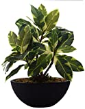 Fourwalls artificial 29cm Tall Natural looking  Bonsai Plant In A Ceramic Pot For Home Office Decor (45 Leaves)