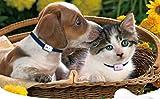 Girafus® Pro-Track-tor Haustier Hund Katze Kleintier