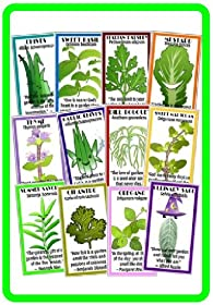 VARIETY PACK OF THE 12 MOST USEFUL AND POPULAR HERBS with Easy Instructions to Grow Your Own Fresh Herbs, Indoors or Out - High Quality Non-GMO and Non-Hybrid Seeds!