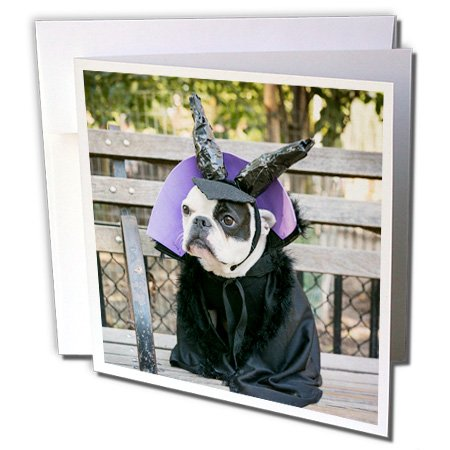 Danita Delimont - Halloween - New York City. Pet Halloween contest at Thompkins Square Park. - 12 Greeting Cards with envelopes (Dog Halloween Costume Contest)
