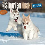 Siberian Husky Puppies 2015 Mini
