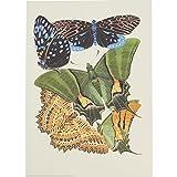Les Papillons (plate 16) by E. A. Seguy (Giclée Print)||EVAEX
