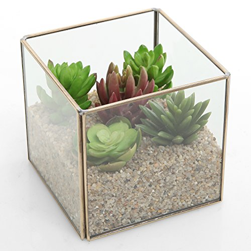 Small Vintage Brass Metal & Clear Glass Decorative Display Box / Jewelry Case / Air Plant Terrarium Cube