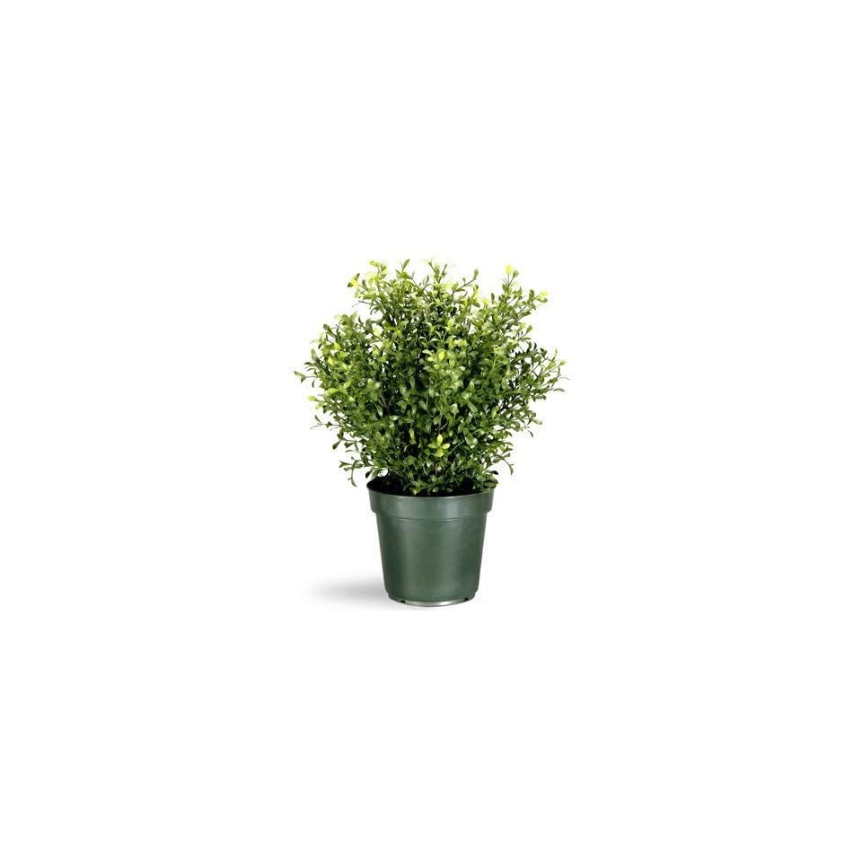 """Shop 24"""" Potted Artificial Realistic Argentea Jade Plant at the  Home Décor Store. Find the latest styles with the lowest prices from National Tree Company"""