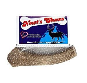 Newts Chews Antler, Medium by Newt's Chews