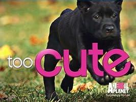 Too Cute! Season 2 [HD]