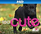 Too Cute! [HD]: Puppy Love [HD]