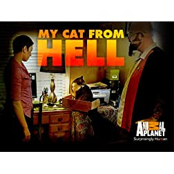 Cats From Hell Season 2