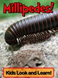 img - for Millipedes! Learn About Millipedes and Enjoy Colorful Pictures - Look and Learn! (50+ Photos of Millipedes) book / textbook / text book