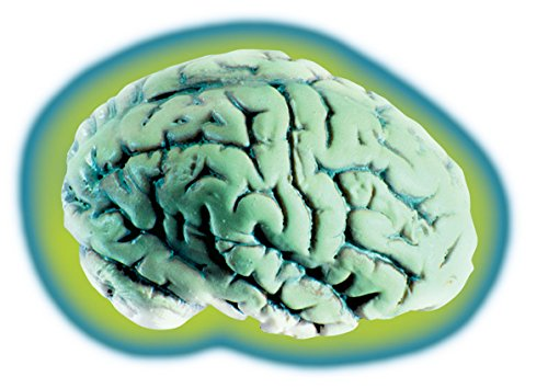 Loftus Glowing Alien Brain Halloween Decoration Prop Green