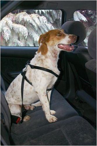 Sporttaschen & Rucksäcke Schultertasche Umhängetasche Messenger Bag Langhaar Collie Liebling Haustier Dog