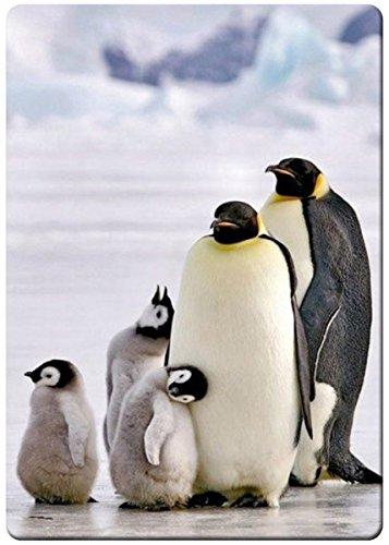 Polar penguin family portrait fridge magnet (Penguin Fridge compare prices)