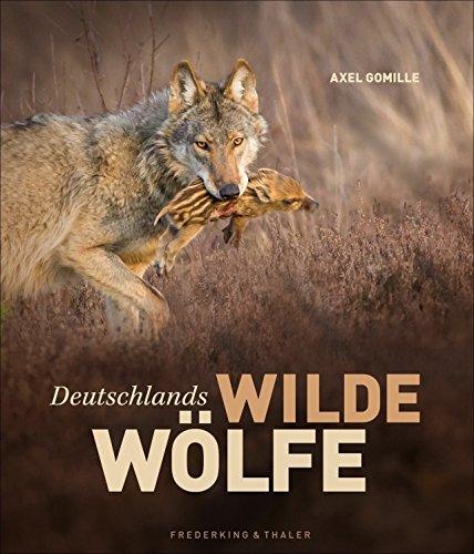 Bildband Wölfe - Begegnungen in freier Wildbahn: Deutschlands wilde Wölfe kehren zurück - Ein einmaliges Erlebnis von Wildnis und Natur mit 230 außergewöhnlichen Fotos und Texte von Experten