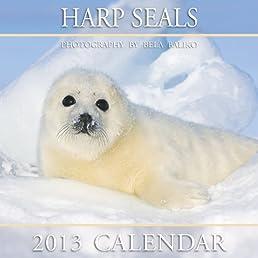 Harp Seals 2013 Calendar