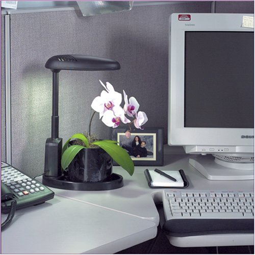 Indoor Plant Stands - Office