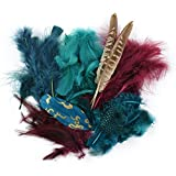 Touch of Nature Packed Feather Assortment for Arts and Crafts, 7gm, Teal/Wood/Jasper