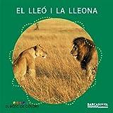 El lleó i la lleona (Llibres Infantils I Juvenils - El Bosc De Colors)