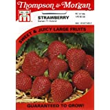 Thompson & Morgan 998 Strawberry Sarian Seed Packet