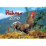 Hühner 2016