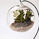 Vase Suspendu en Verre Transparent Boule pour Plantes Fleurs Décoration de Jardin Maison...