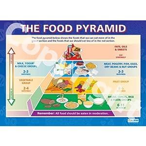 food pyramid essay topics