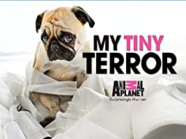 My Tiny Terror Season 1 [HD]