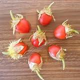 Süße -Litschitomate- 10 Samen