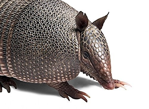 Wallmonkeys Armadillo Peel and Stick Wall Decals (36 in W x 26 in H) (Armadillo Hair Brush compare prices)