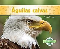 Águilas calvas / Bald Eagles