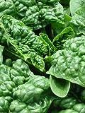 PLUS PACK - Bloomsdale Spinach Seeds - 10 grams
