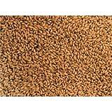 玄麦 無農薬  小麦 種 200g