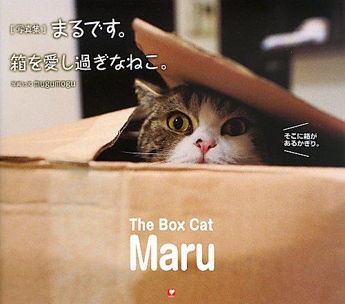 まるです。箱を愛しすぎなねこ。