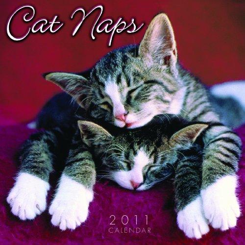 Cat Naps 2011 Mini Wall Calendar (Calendar)