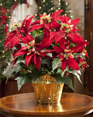 this artificial christmas pine bouquet will look great in your home pine bouquet comes with pinecones poinsettia flowers and 10 lights